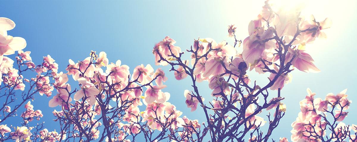 Spring-WhereToGo