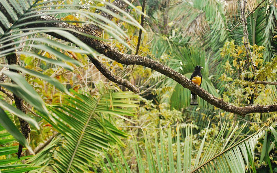 Nosara Costa Rica - Rainforest