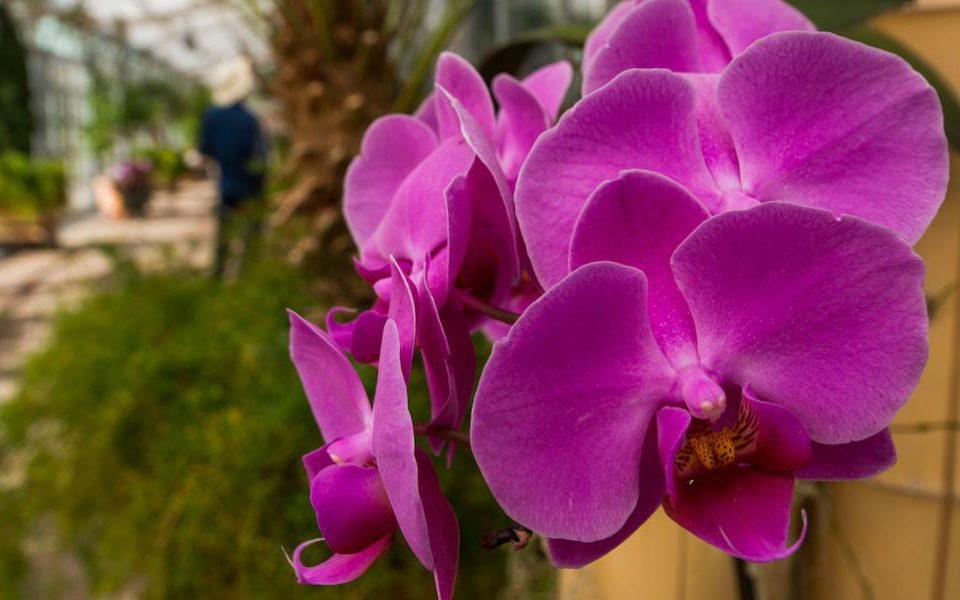 Blog Denver Orchid